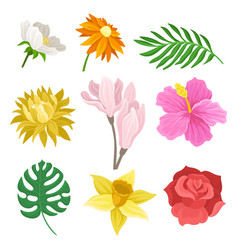 flat set of different flowers and green vector image