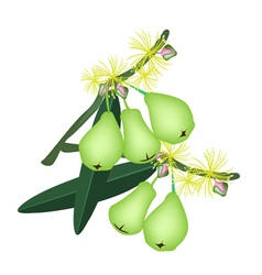 Green Water Apples and Blossom on White Background vector image