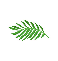 bright green leaf of tropical plant natural vector image