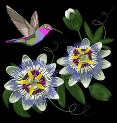 hummingbird and passiflora vector image vector image