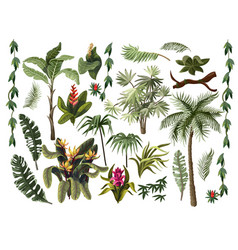 Jungle trees and flowers isolated vector