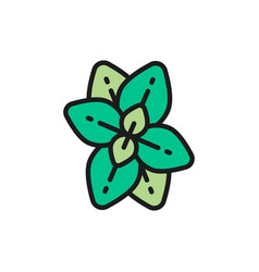 Oregano mint basil flat color line icon vector