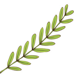 Tamarind branch with green leaves vector