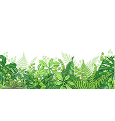 Tropical plants line horizontal border vector