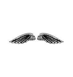 hand drawn of wings on white vector image