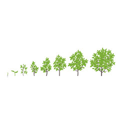 Tree growth stages ripening vector
