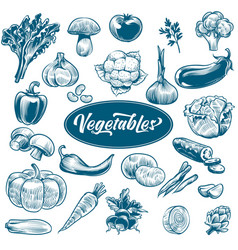 chalk drawing vegetables various vintage hand vector image
