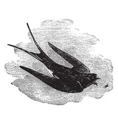 Common european swallow vintage vector