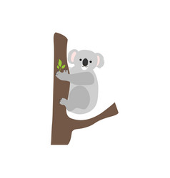 Koala bear on a tree vector