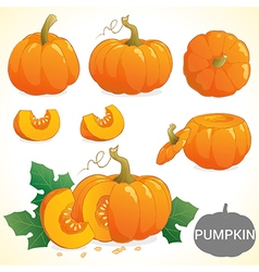 Set of pumpkin in various styles vector