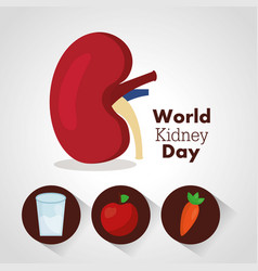 World kidney day card health food water care vector