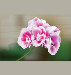 geranium flowers bouquet isolated beautiful vector image vector image