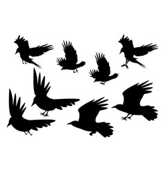 set of silhouette flying raven bird with leg vector image vector image