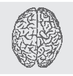 Brain on gray background vector image