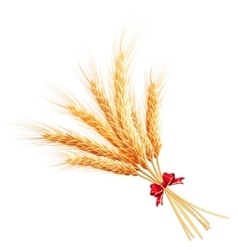 Bunch of wheat on white background EPS 10 vector image