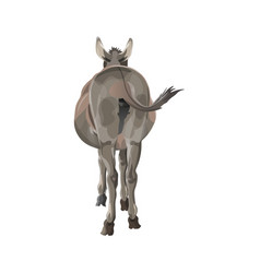 Donkey butt vector