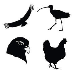 Hen gyrfalcon condor curlew vector