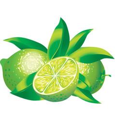 limes vector image