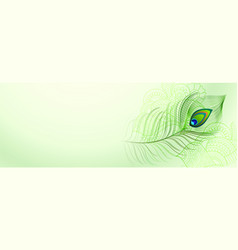 Beautiful peacock feather background with text vector