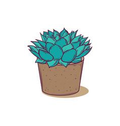 Decoration plant succulent polyphilla vector