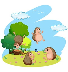 Four hedgehog in the field vector