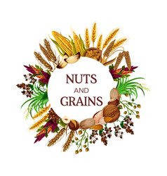Nuts and cereal grains kernels and seeds vector
