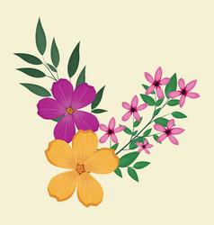 plumeria flowers decorative image vector image