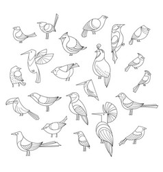 Birds set lined collextion vector