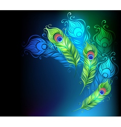 Bright Peacock Feathers vector image