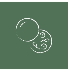 Donor sperm icon drawn in chalk vector image