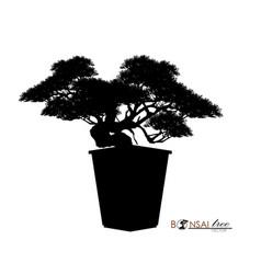 Bonsai tree realistic style vector