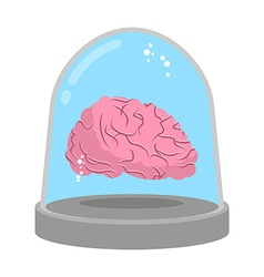 Brain in glass bell Laboratory research Study of vector