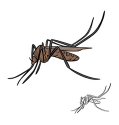 brown mosquito sketch doodle hand vector image