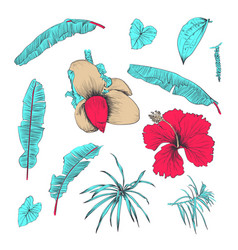 hand drawn of tropical plants and flower vector image