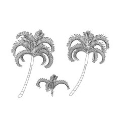 Handdrawn plant clipart vector