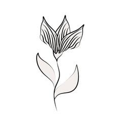 minimalist tattoo flower elegant flora line art vector image