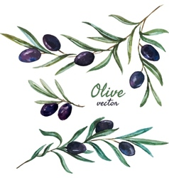 Olives vector image