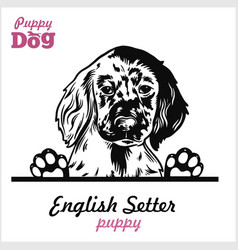 puppy english setter - peeking dogs - breed face vector image