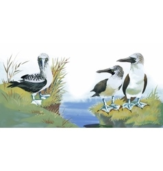 Seagulls flock swimming on pond watercolor vector