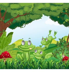 Three frogs at the forest vector