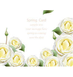 white delicate white roses blossom card beautiful vector image