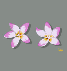 Isolated tropical flowers plumeria image vector