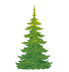 One tall spruce tree isolated vector
