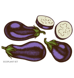 Set hand drawn colored eggplant vector