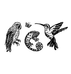 tropical birds and chameleon parrot vector image