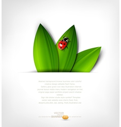 grey background with leafs and ladybird vector image vector image