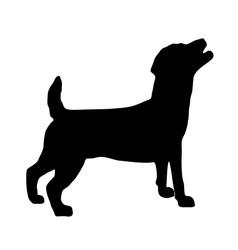 Jack Russel Terrier Silhouette vector image
