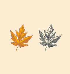 autumn leaves or herb rustic decorative maple vector image