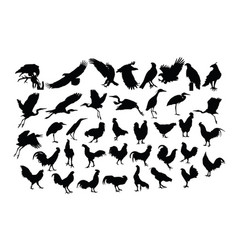 bird and rooster silhouettes vector image