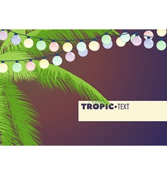 Leaves of palm trees vector image